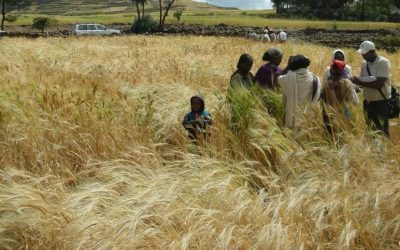 The importance of agrobiodiversity conservation for future farming